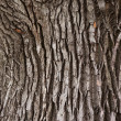 Texture of wood — Stock Photo