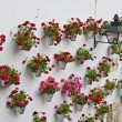 Andalusian patio geraniums — Stock Photo