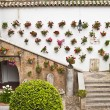 Stock Photo: Andalusian patio