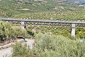 Most mezi olivovníky v cordoba, španělsko — Stock fotografie