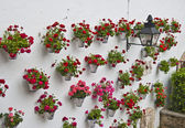Andalusian patio geraniums — Foto Stock