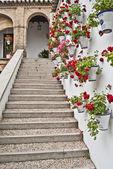 Schritte mit geranien — Stockfoto