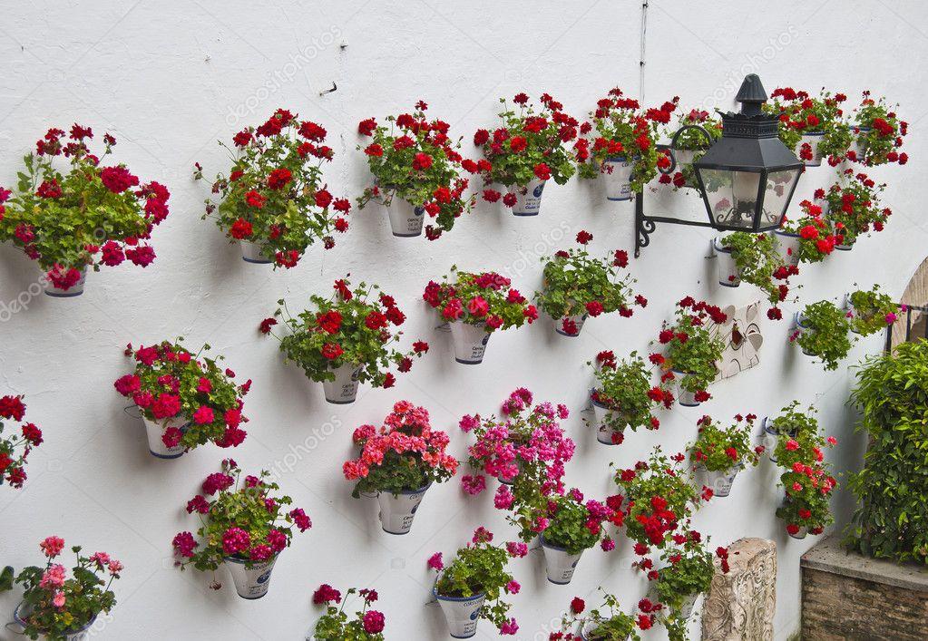 Andalusian patio geraniums stock photo neftali77 6166468 - Care geraniums flourishing balcony porch ...