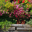 Stock Photo: Flowers in the garden.