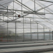 Royalty-Free Stock Photo: Greenhouse.