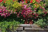 Flowers in the garden. — Stock Photo
