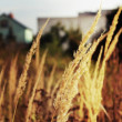 Yellow grass — Stock Photo #6160062