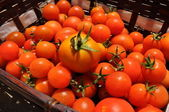 Tomatoes in a basket — Stock Photo