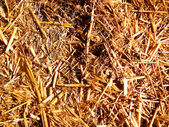 太陽光の下で黄金の干し草 — ストック写真