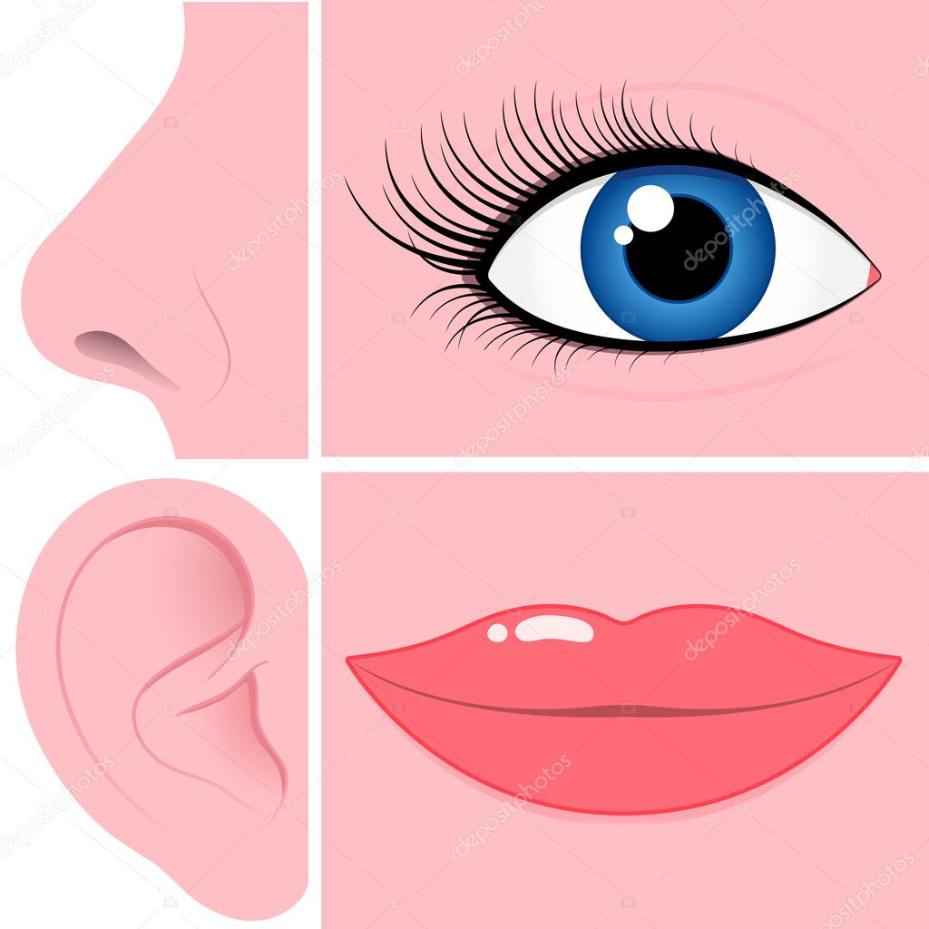Nose, eye, ear and mouth collection — Stock Vector #6494503