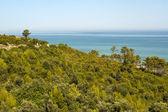 The coast of Gargano (Puglia, Italy) at summer — Stock Photo
