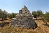 Murge (Puglia, italy) - Trullo and olive trees — Stock Photo