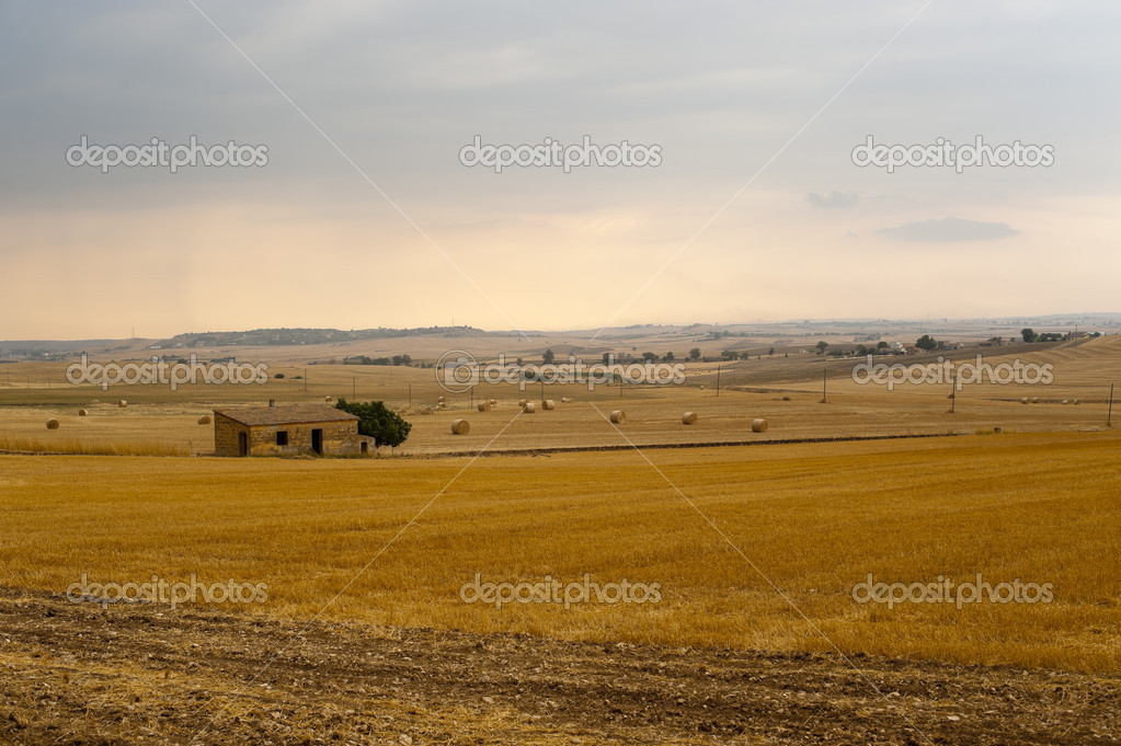 Basilicata (Matera) - Farm at summer  Stock Photo #6217993