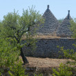 Murge (Puglia, italy) - Trulli and olive trees — Stock Photo
