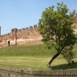 Castelfranco Veneto (Treviso, Veneto, Italy): Ancient walls and — Stock Photo #6455080