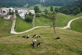 Lessinia (Verona, Veneto, italy), landscape: village and cows at — Stock Photo