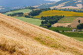 Marches (Italy) - Landscape at summer — Stock Photo