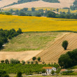 Marches (Italy) - Landscape at summer — Stock Photo #6655435