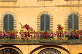 Lucca, three closed windows — Stock Photo