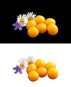 Wild plums and wood flowers. — Stock Photo