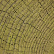 Stock Photo: Log Texture