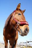 Pferd und Pferdesport — Stock Photo