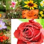 Blumen und Blüten — Stock Photo #6268340