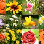 Blumen und Blüten — Stock Photo #6268359