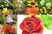 Blumen und Blüten — Stock Photo