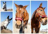 Pferde — Stock Photo