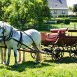 Horse-drawn carriage - Stock Photo