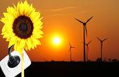可再生能源 — 图库照片