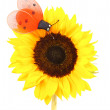 Sunflower — Foto de stock #6602375