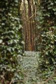 Na floresta... — Stock Photo