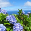 Azores — Stock Photo #6290417