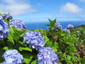 Azores — Stock Photo