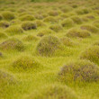 Stock Photo: Bumpy grass
