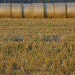 Straw bales - Foto Stock