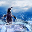 Penguin on the Ice in water drops. — Photo