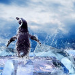 图库照片: Penguin on the Ice in water drops.