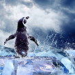 Penguin on the Ice in water drops. — Stockfoto