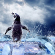 Penguin on the Ice in water drops. — Stock Photo #6353197