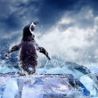 Penguin on the Ice in water drops. — Stock fotografie