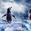 Penguin on the Ice in water drops. — Foto de Stock