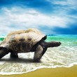 Big Turtle on the tropical oceans beach — Stock Photo #6353497