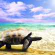 Big Turtle on the tropical oceans beach — Stock Photo #6353500