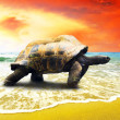 Big Turtle on the tropical oceans beach — Stockfoto
