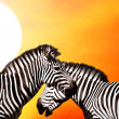Two Zebras on the sky — Stock Photo #6353510
