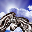 Foto Stock: Two Zebras on sky