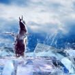 Penguin on the Ice in water drops. — Stock Photo #6355240